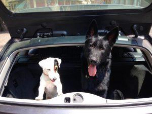 Trasporto animali in auto: foto